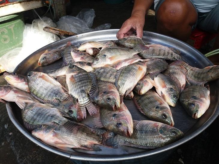 9 tipos de peixe que não são bons para consumo