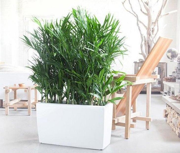 Plantas que podem diminuir a umidade da sua casa
