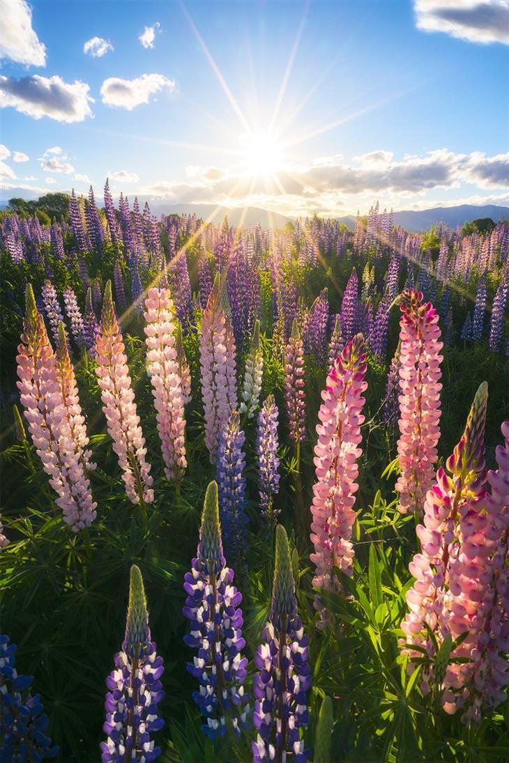 18 imagens perfeitas da natureza