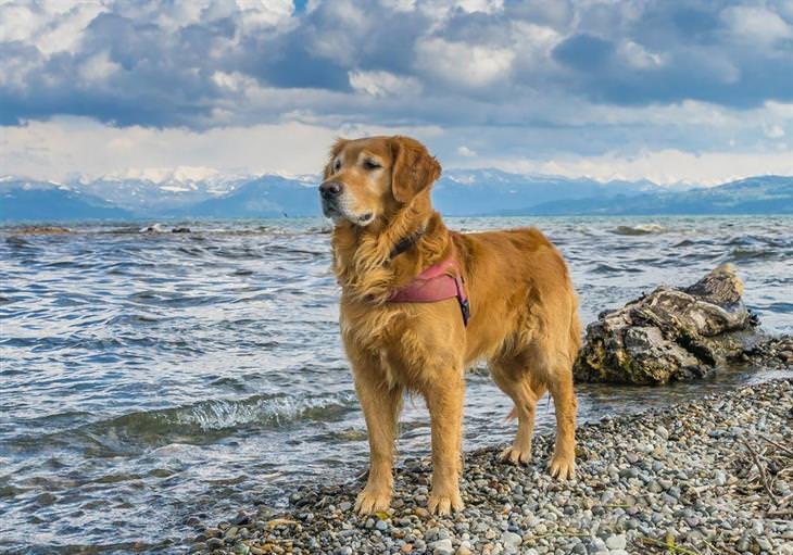 cães no verão