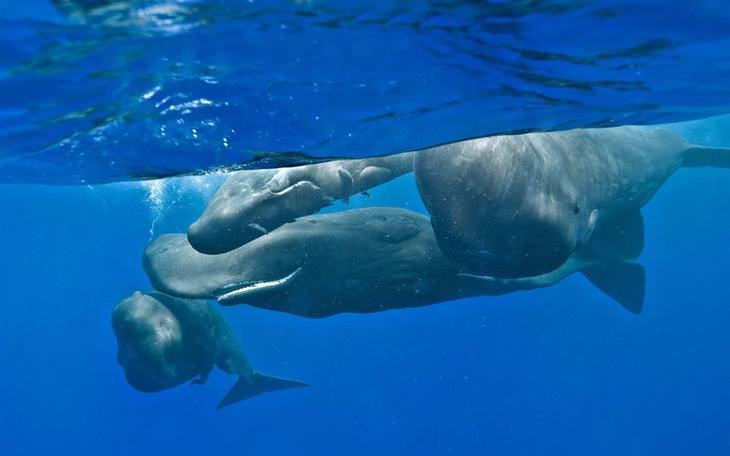 fotos de baleias e golfinhos