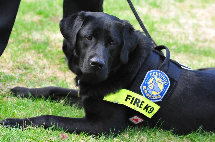 Dogs working: arson dog
