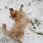 Primeira neve!