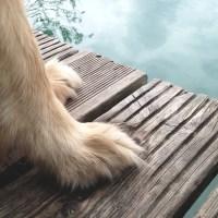 Planejando uma viagem de carro pela Europa com um cachorro