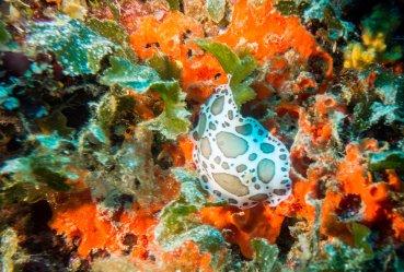 Diving in the Adriatic Sea