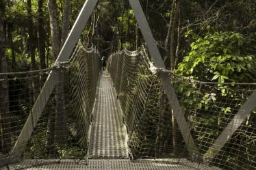 lekki-forest