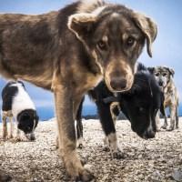 Los mejores vídeos de perros pescadores