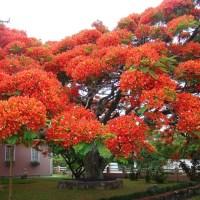 Los 15 árboles más espectaculares del mundo