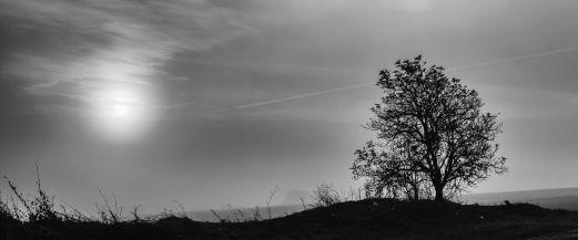 Morning's tree