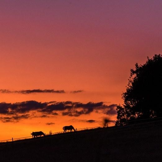 Sunset à Mézu I