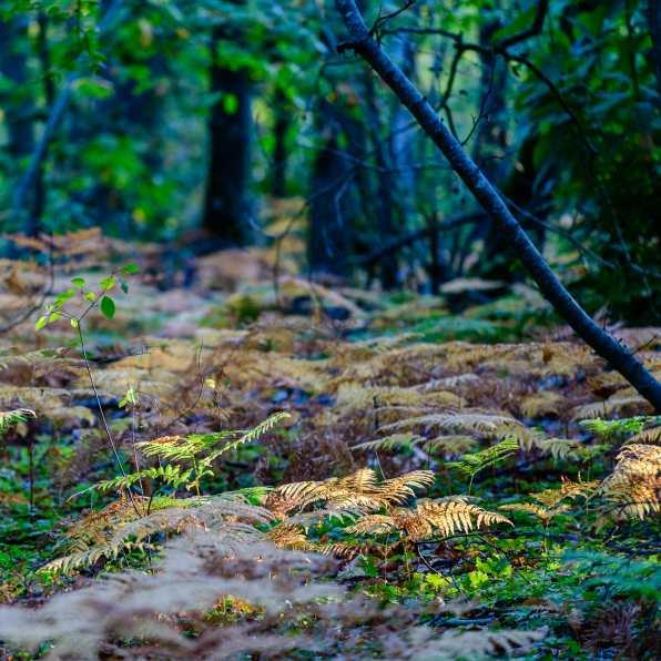 L'automne arrive II