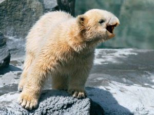 685x513xdes-ours-avec-des-becs-1.jpg.pagespeed.ic.TfzkpP2KWZ