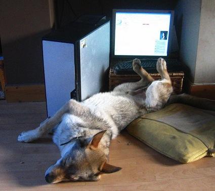 budgets-asleep