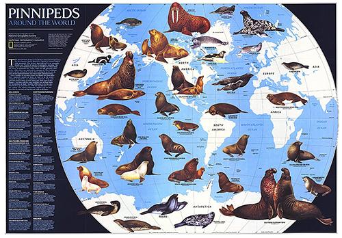 seals vs sea lions