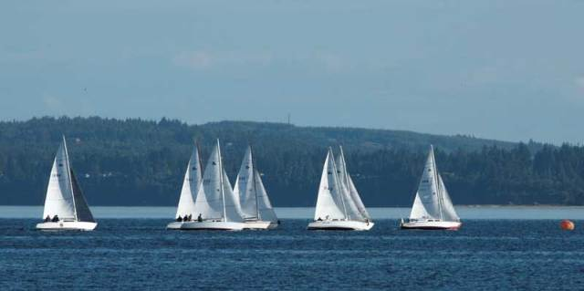 Tight racing in the T-Bird class. Photo by Wendy Feltham