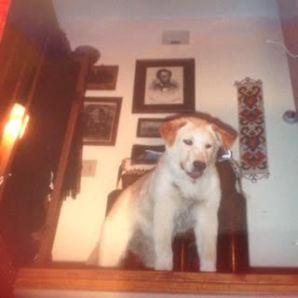 walter puppy stairs