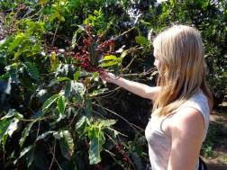 Panama Coffee Farm 10