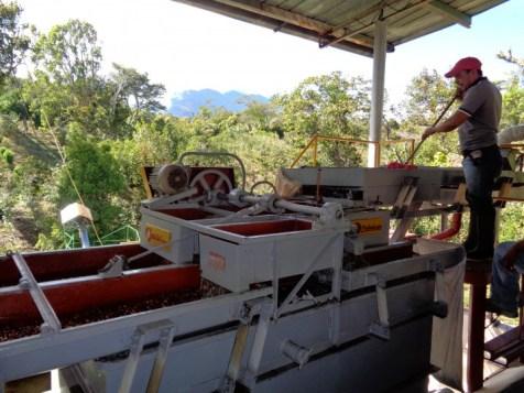Panama Coffee Farm 6