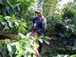 Panama Coffee Farm 9
