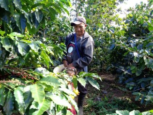 Panama Coffee Farm 9