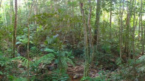 Regenwald pur