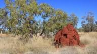Termiten (das rote Ding ist ca. 2m hoch)