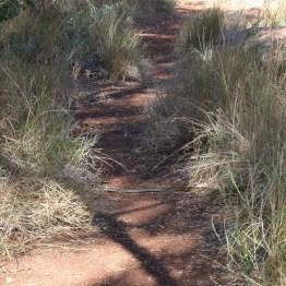 Schlange quer im Weg