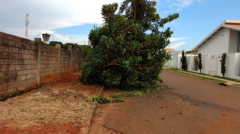 Queda de árvore no bairro Jardim Progresso