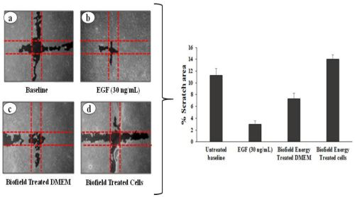 small resolution of figure 1 cell migration potential of biofield energy treatment on hacat cell line and dmem in scratch assay using wimscratch image analysis