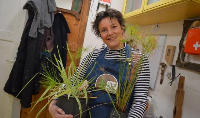 Mies lapt planten weer op in haar asiel  Gazet Bergen op Zoom