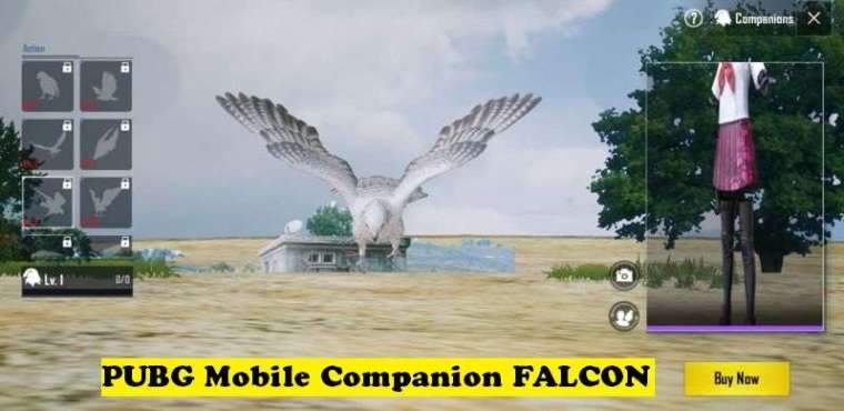 PUBG Mobile Companion FALCON