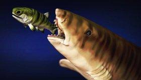 Scientists Model How Prehistoric Shark Cut Through Prey With 'Scissor Jaws' image