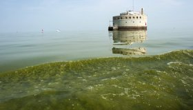 Toledo, Ohio, Just Granted Lake Erie the Same Legal Rights as People image