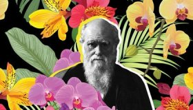 How a Love of Flowers Helped Charles Darwin Validate Natural Selection image