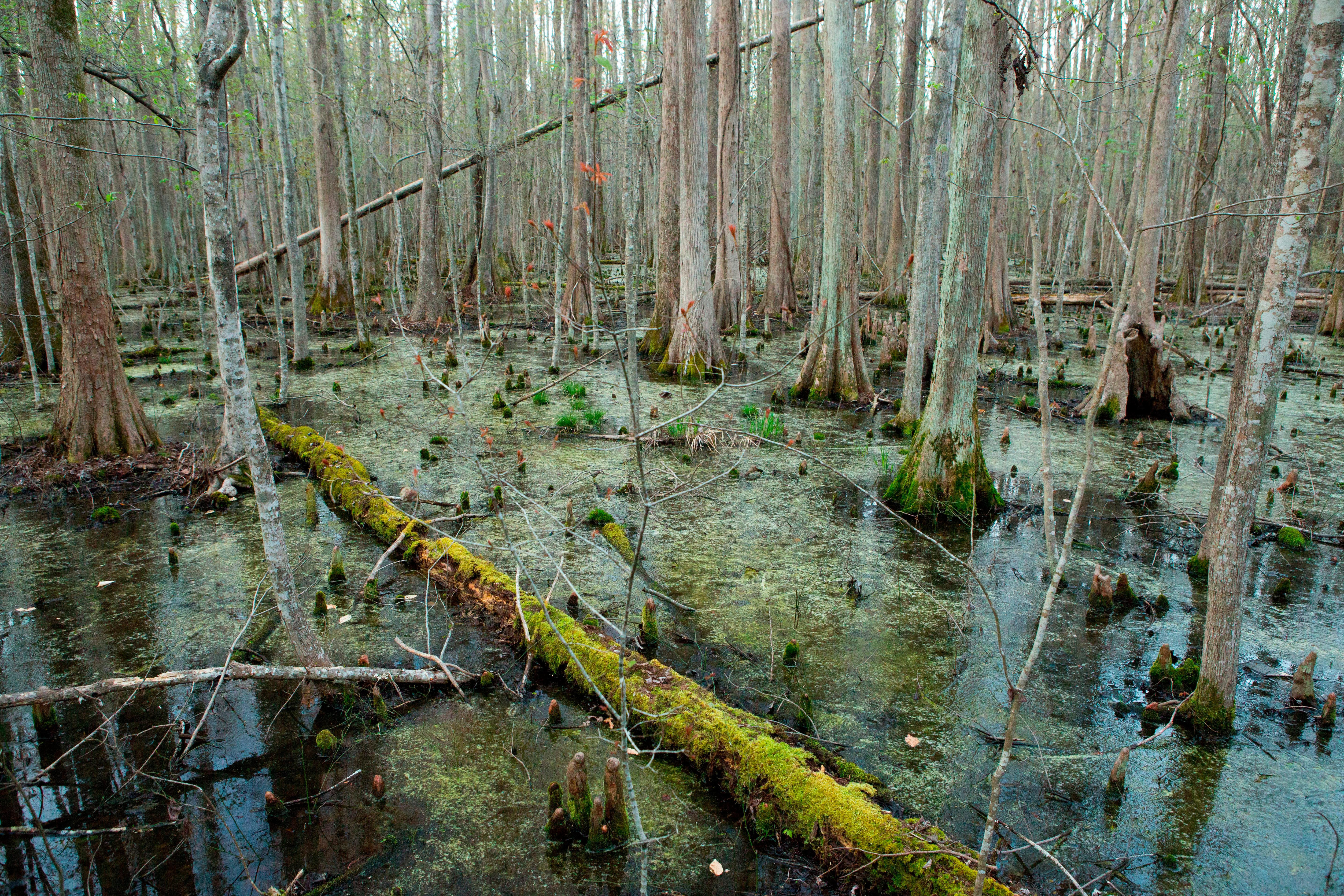 Deep in the Swamps Archaeologists Are Finding How