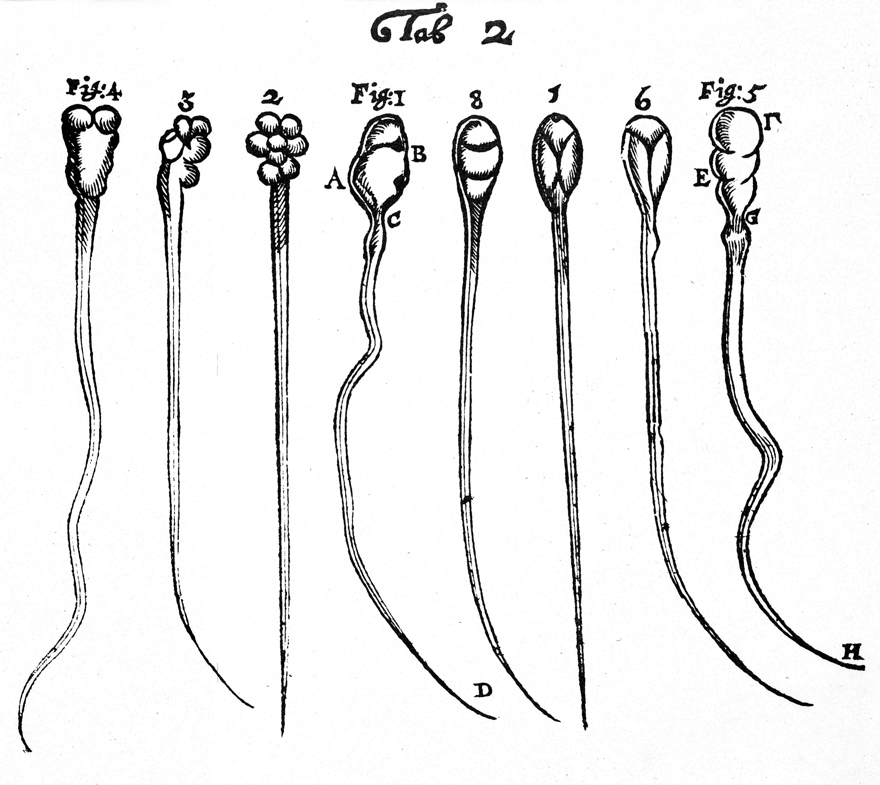 The Long Winding Tale Of Sperm Science