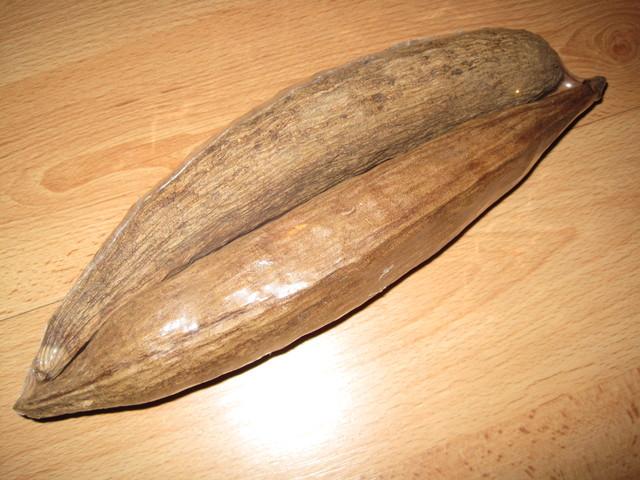 Kapokschote oder Baumwollschote für den Hamster als Nistmaterial