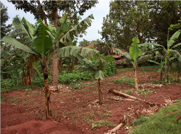 Agriculture, Kampala School for Physically Handicapped (Uganda)