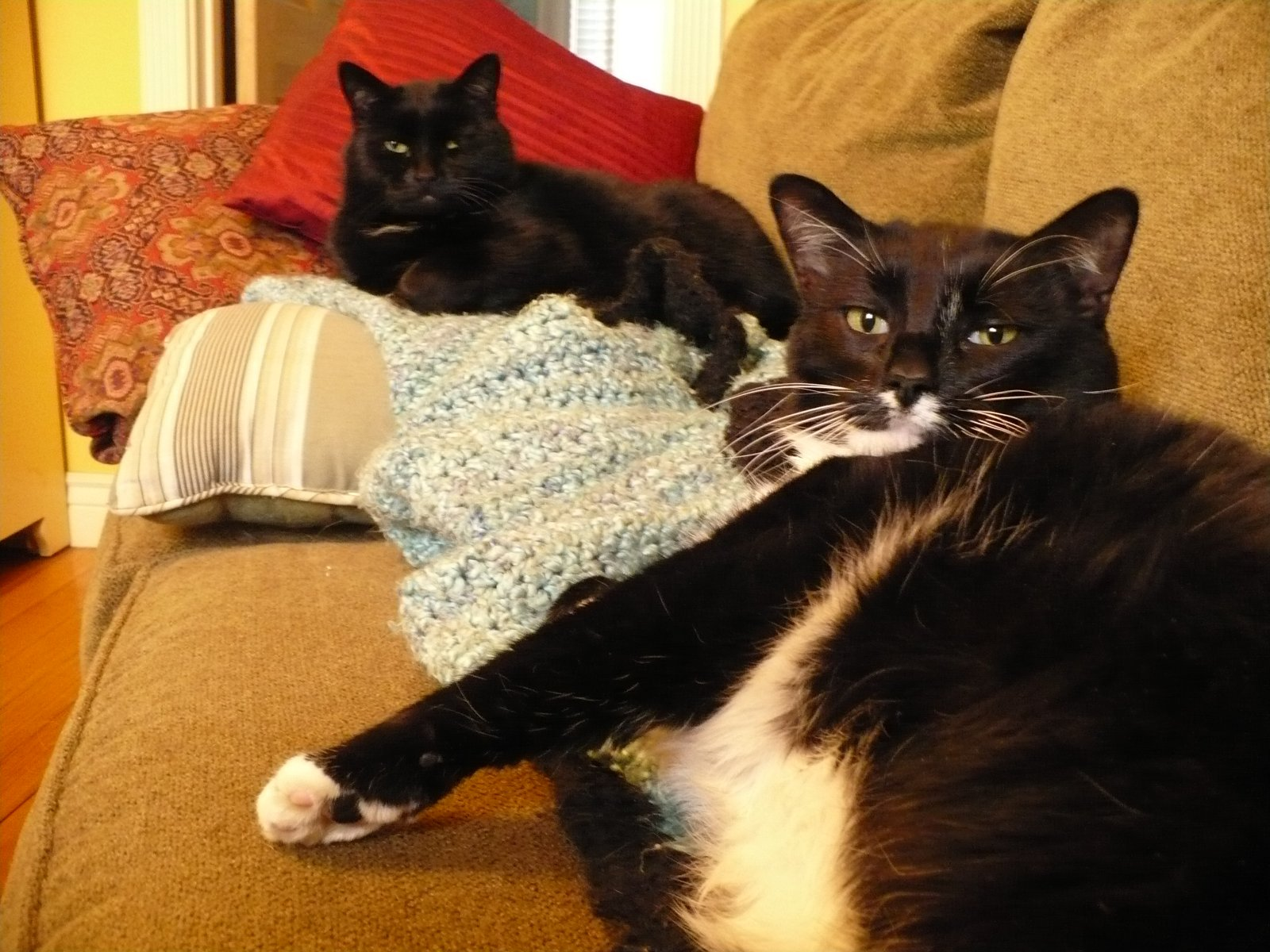 Our Gracie and Mr. Mittens relaxing.  February 2010