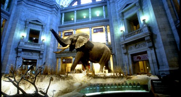 Dc Museums Open Zoo Closed Smithsonian