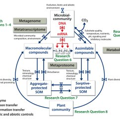 The Carbon Cycle Diagram Gcse 98 Honda Accord Fuse Image Microbial Communities And Soil Cycling