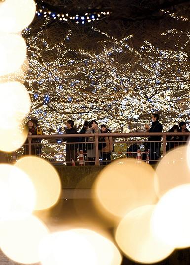 東京目黑川金黃色穹頂 50萬盞彩燈夢幻閃耀(視頻):朝日新聞中文網