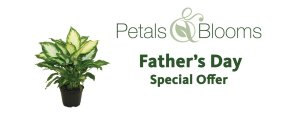 Petals and Blooms Father's Day sale