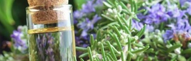 11 Impressive Health Benefits and Uses of Rosemary Oil and Leaves - FinerMinds