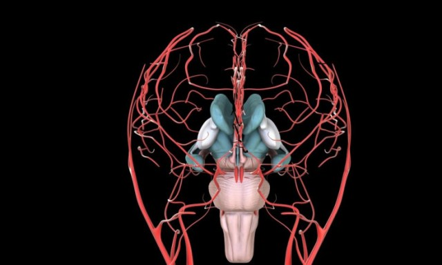 Is Chronic Pain in Fibromyalgia Caused by a Hyperreactive Brain Network?