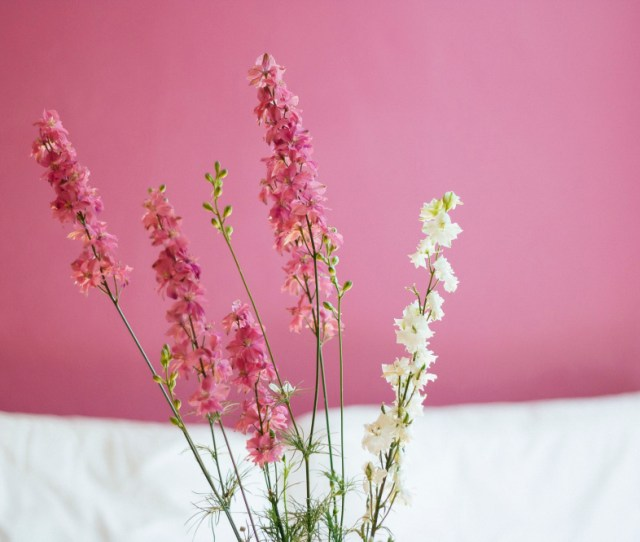 Public Domain Images Pink White Green Flowers Nature