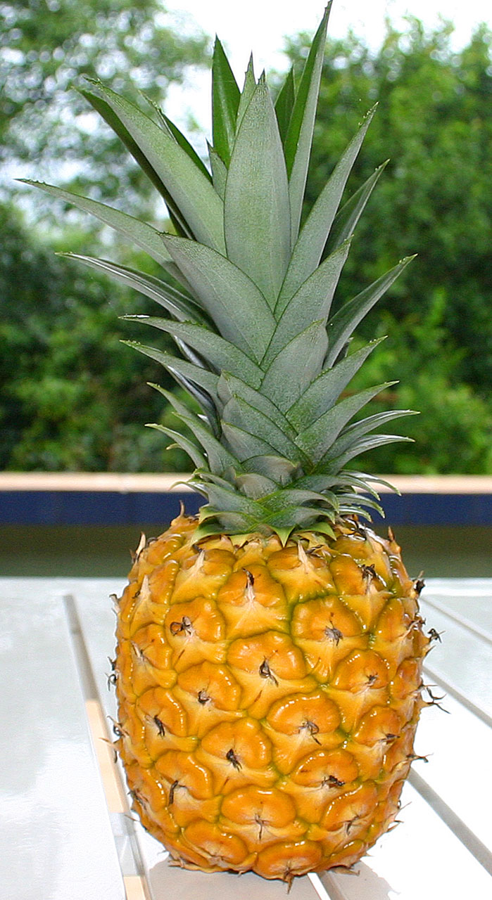 Ripe Pineapple Free Stock Photo  Public Domain Pictures