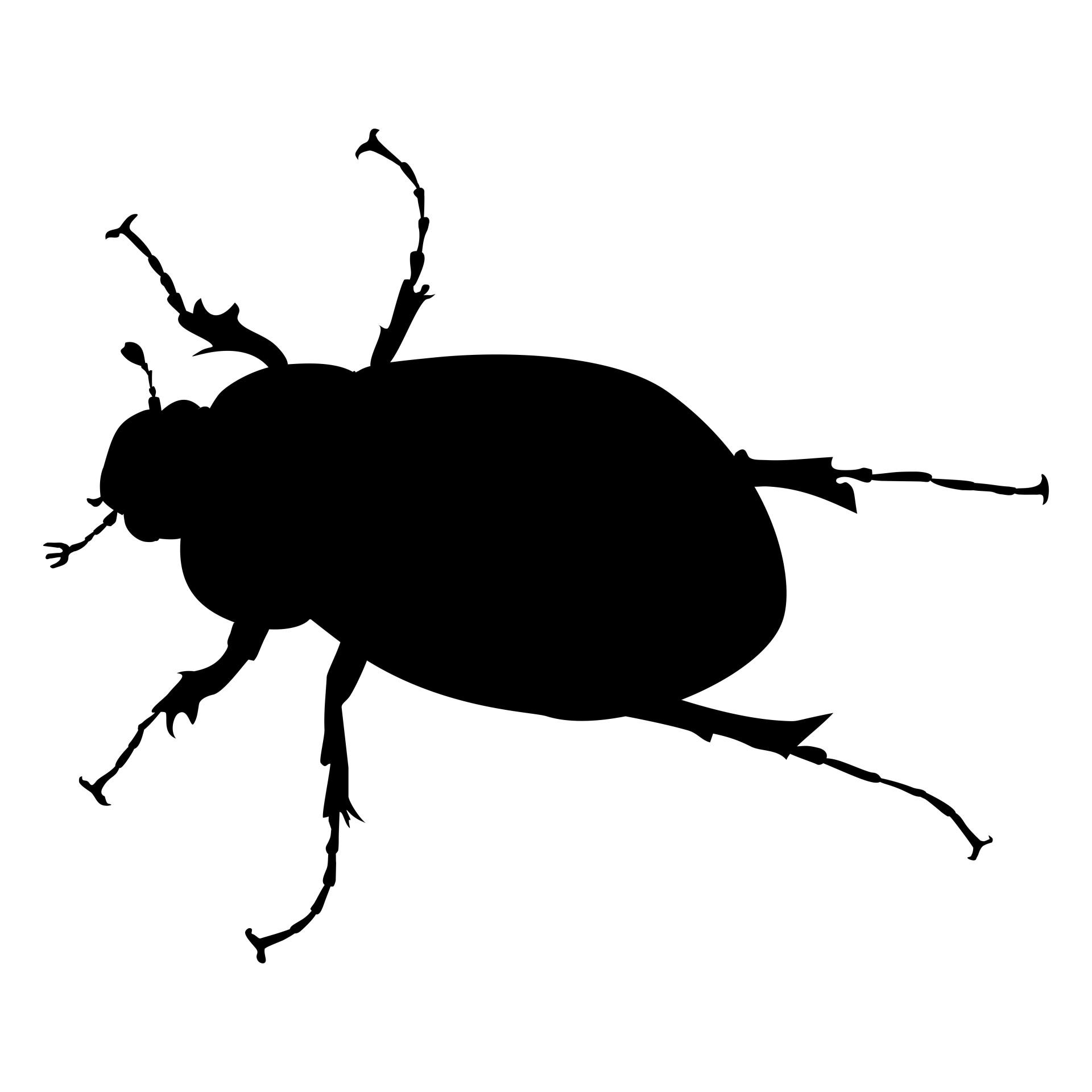 June Bug Free Stock Photo  Public Domain Pictures