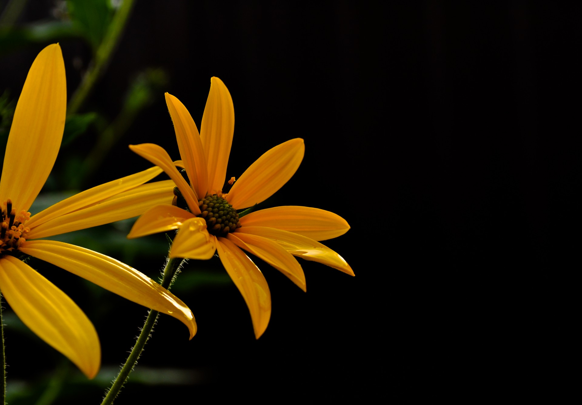 3d Wallpaper For Pc Yellow Flowers On A Dark Background Free Stock Photo