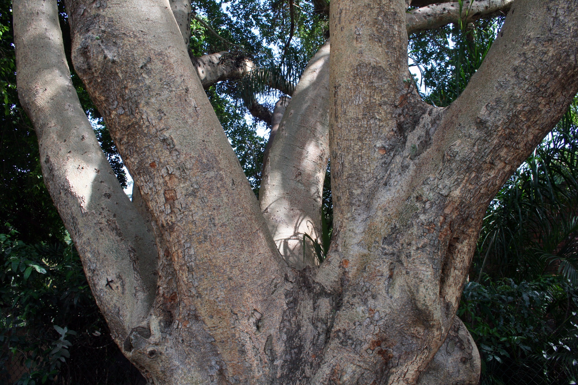 Strong Thick Tree Base Free Stock Photo Public Domain